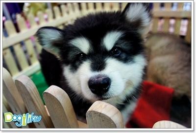 Dogilike.com :: เตือนภัย! เมื่อซื้อหมาตะกร้ากับปัญหาที่ต้องระวัง
