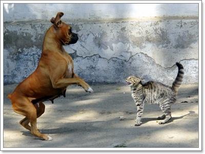Dogilike.com :: ไขประเด็นคาใจ...เพราะอะไรน้องหมากับน้องแมวไม่ถูกกัน!?