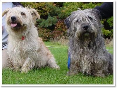 Dogilike.com :: 10 สายพันธุ์ น้องหมาขาสั้นที่ใครหลายคนอาจยังไม่รู้จัก!