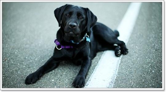 Dogilike.com :: ไขความเชื่อ! ทำไมหมาดำถึงเป็นสัญลักษณ์ของความโชคร้าย?