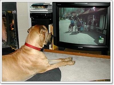 Dogilike.com :: ระวัง! 3 มลภาวะในเมืองเสี่ยงส่งผลต่อพฤติกรรมน้องหมา