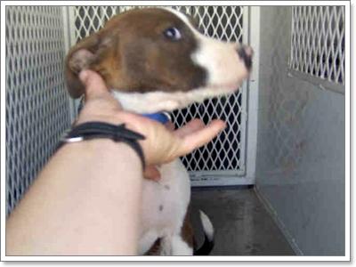Dogilike.com :: เปิดหู เปิดตา เปิดใจ เรียนรู้ภาษาน้องหมาฉบับเต็ม!