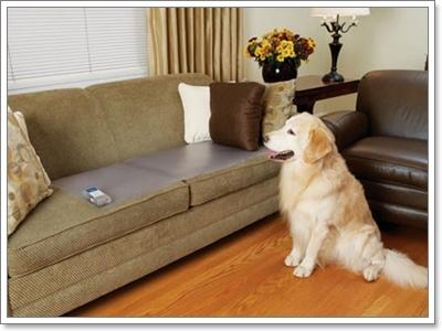 Dogilike.com :: อุปกรณ์ไฮเทคสำหรับการฝึกน้องหมา ล้ำสมัยแบบสุดๆ