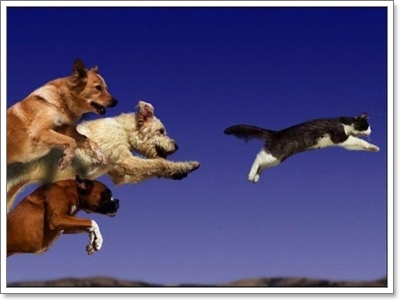 Dogilike.com :: 10 เทคนิค จำเป็นต้องฝึก! ก่อนพาน้องหมาออกเที่ยว