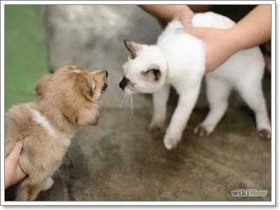 Dogilike.com :: วิธีมัดใจให้น้องหมาเป็นมิตรกับน้องแมว ฉบับจัดเต็ม!