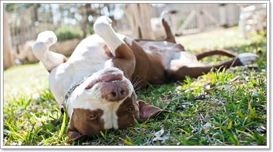Dogilike.com :: ค้นคำตอบ....ทำไมกลิ่นซากสัตว์และขยะเหม็นเน่าถึงถูกใจน้องหมา!?