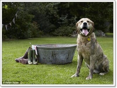 Dogilike.com :: ╓И╧╓с╣м╨....╥сДа║етХ╧╚р║йя╣гЛАеп╒бпЮкаГ╧Ю╧Хр╤ж╖╤ы║Ц╗╧Им╖кар!?