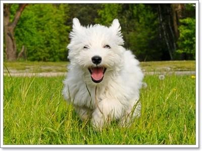 Dogilike.com :: พฤติกรรมน่าปวดหัวของ 5 สายพันธุ์น้องหมาขาสั้นสุดฮิต!