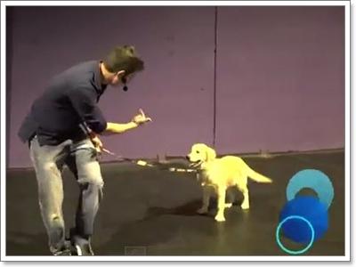 Dogilike.com :: การจ้องตาน้องหมาช่วยให้ฝึกง่ายขึ้น�จริงหรือ?!