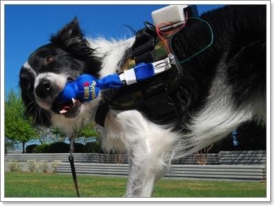 Dogilike.com :: 3 นวัตกรรมสุดไฮเทค! แก็ดเจ็ตช่วยแปลภาษาน้องหมา