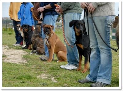 Dogilike.com :: เคล็ด (ไม่) ลับ ฝึกน้องหมาอย่างไรให้ไม่เครียดในหน้าร้อน
