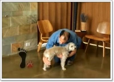 Dogilike.com :: อุ้มหมาใหญ่อย่างไร ไม่ให้เจ็บตัว