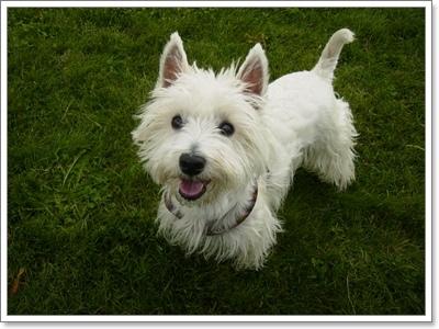 Dogilike.com :: วัดดีกรี! น้องหมาขาสั้นพันธุ์ไหน นิสัยดี น่าเลี้ยงมากที่สุด!