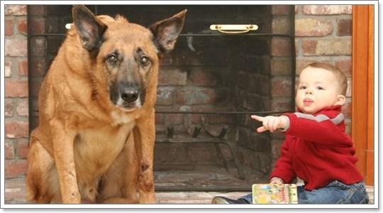 Dogilike.com :: รวมเด็ด 7 พฤติกรรมน้องหมา ที่ผู้เลี้ยงมักเข้าใจผิด คิดไปเอง มากที่สุด!
