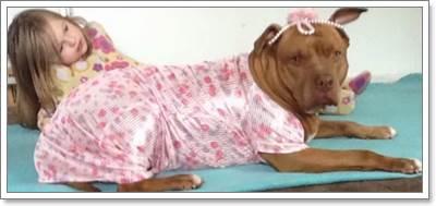Dogilike.com :: คลิปซึ้ง! ความผูกพันแสนน่ารักของเด็กหญิงออทิสติกกับสุนัขคู่ใจ