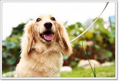 Dogilike.com :: 5 ��ͤ�����ѧ㹡������§�����عѢ�����