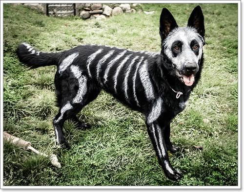 Dogilike.com :: ฮือฮา! ศิลปินมะกันจับสุนัขแสนรักมาวาดรูปโครงกระดูก