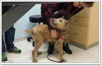 Dogilike.com :: คลิปซึ้ง! สุนัขตาบอดดีใจได้เห็นหน้าเจ้าของอีกครั้ง หลังผ่าตัดตาสำเร็จ