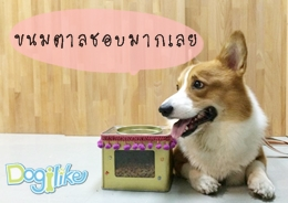 Dogilike.com :: ปี๊บจิ๋วใส่อาหาร