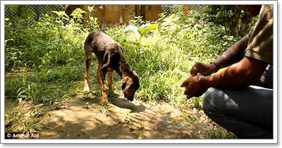 Dogilike.com :: ซึ้งจับใจ! ทั่วโลกชื่นชมอินเดีย หลังช่วยชีวิตสุนัขติดยางมะตอย