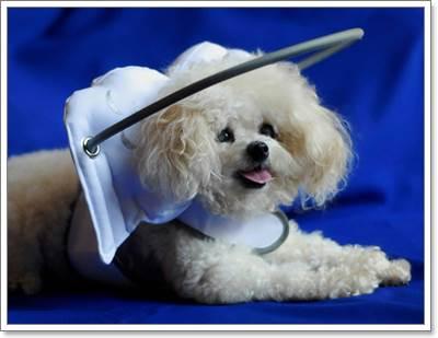 Dogilike.com :: สุดเจ๋ง! เจ้าของประดิษฐ์ห่วงกันชนปีกนางฟ้าให้ตูบตาบอด