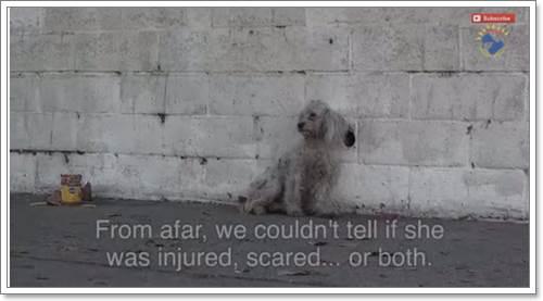 Dogilike.com :: ชาวเน็ตซึ้ง! คลิปการเข้าช่วยเหลือสุนัขจรจัดข้างถนนในสหรัฐฯ