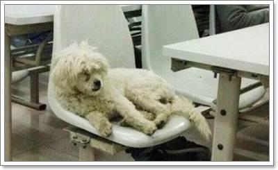 Dogilike.com :: นักศึกษาจีนเดือด! มหาวิทยาลัยวางยาฆ่าสุนัขจรจัดที่ชอบเข้าร่วมชั้นเรียน