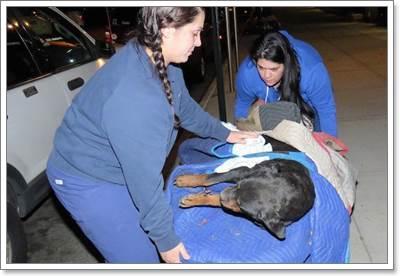 Dogilike.com :: หวุดหวิด! พลเมืองดีช่วยชีวิตสุนัขป่วย หลังถูกโยนทิ้งจากรถยนต์