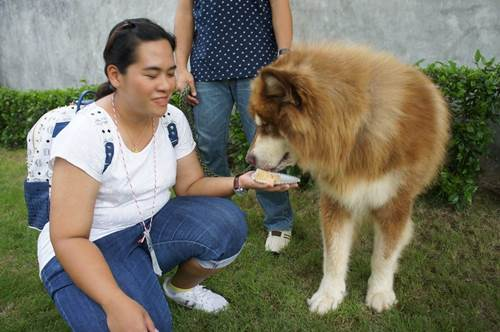 Dogilike.com :: ควันหลง! Alaskan Club Thailand Meeting 2 @Up2dogs