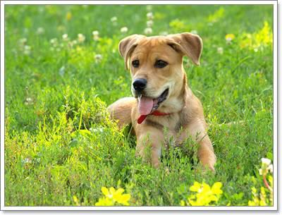 Dogilike.com :: 5 วิธีเตรียมพร้อม เมื่อจำเป็นต้องทิ้งสุนัขไว้บ้านตามลำพัง