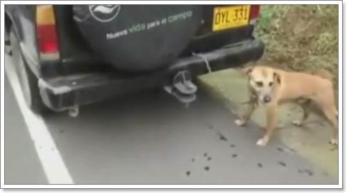 Dogilike.com :: ครูโหด! ผูกสุนัขท้ายรถยนต์ หวังลากให้ตายคาถนน