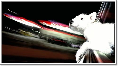 Dogilike.com ::  11 ภาพถ่ายที่ยืนยันว่า สุนัขที่มีความสุขสุด ๆ เมื่อได้นั่งรถยนต์