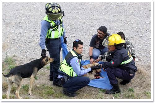 Dogilike.com :: ชื่นชม! ดับเพลิงฮีโรช่วยชีวิตสุนัขจรจัดถูกรถชนสาหัส
