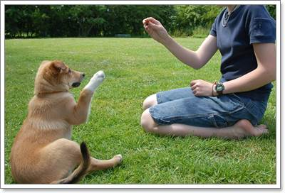 Dogilike.com :: 1 ปีที่ผ่านมาคุณดูแลสุนัขแสนรักดีแล้วหรือยัง?