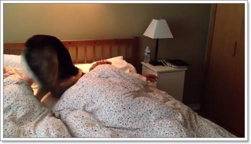 Dogilike.com :: คลิปน่ารัก! เมื่อเจ้าของโดนเจ้าตูบสุดรักปลุกจากเตียง