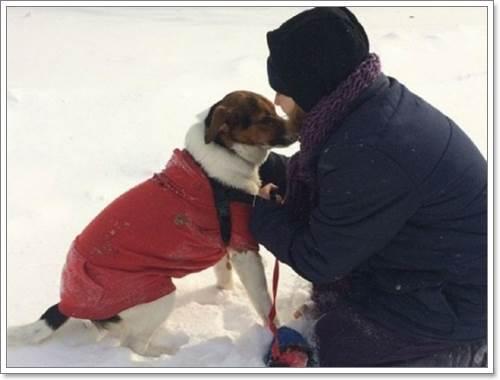 Dogilike.com :: ภาพประทับใจ พลเมืองดีช่วยสุนัขพลัดหลงในอุณหภูมิติดลบ!