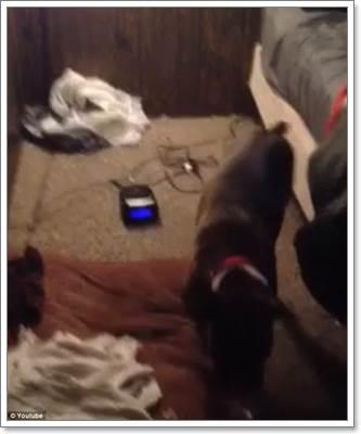 Dogilike.com :: ฮือฮา! คลิปเจ้าของแอบถ่ายเจ้าตูบตัวแสบปิดนาฬิกาปลุก