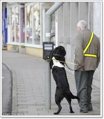Dogilike.com :: น่าทึ่ง! สุนัขนำทางกดปุ่มจราจรให้เจ้าของตาบอดข้ามถนน