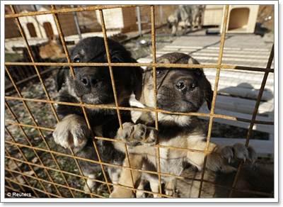 Dogilike.com :: เศรษฐีรัสเซียตั้งศูนย์พักพิงช่วยสุนัข ก่อนถูกฆ่าต้อนรับโอลิมปิค