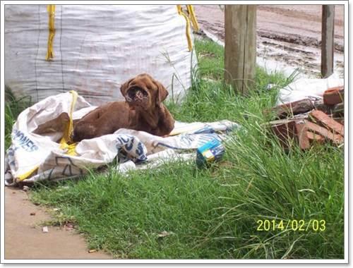 Dogilike.com :: 2 พลเมืองดีช่วยชีวิตสุนัขจรจัดจมูกติดเชื้อในประเทศอาร์เจนตินา