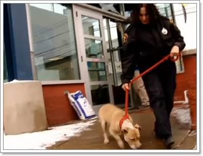 Dogilike.com :: ตำรวจช่วยชีวิต 6 สุนัข หลังเจ้าของล่ามโซ่ทิ้งไว้ในอากาศติดลบ