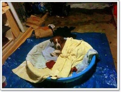 Dogilike.com :: รอดตาย! หญิงพลเมืองดีช่วยชีวิตสุนัขจรจัดกลางพายุหิมะ
