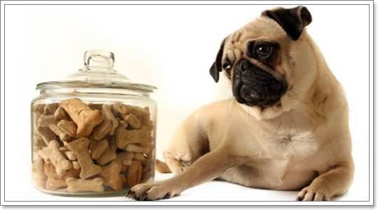 Dogilike.com :: เคล็ด(ไม่)ลับ การเก็บรักษาอาหารสุนัขอย่างถูกวิธี