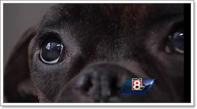 Dogilike.com :: เหลือเชื่อ! สุนัขรอดชีวิตปาฏิหาริย์หลังติดในหิมะนาน 9 วัน
