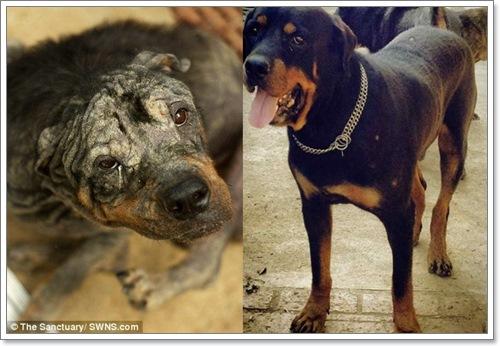 Dogilike.com :: ซึ้ง! สุนัขถูกทิ้งใกล้ตายได้รับความช่วยเหลือจนกลับมาเป็นปกติ