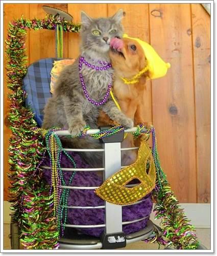 Dogilike.com :: มิตรภาพ! ชิวาวาถูกทิ้งให้ความอบอุ่นลูกแมวในอากาศติดลบ
