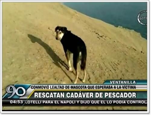 Dogilike.com :: ซื่อสัตย์! สุนัขภักดีนั่งเฝ้าอุปกรณ์ตกปลารอเจ้าของที่เสียชีวิต