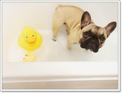 Dogilike.com :: 5 วิธีดูแลรอยย่นของน้องหมาขนสั้น ให้ห่างไกลโรคผิวหนัง