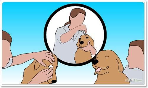 Dogilike.com :: เจาะลึกวิธีทำความสะอาดดวงตาสุนัขที่ถูกต้อง