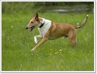 Dogilike.com :: ใครว่า ... หน้าร้อนไม่ต้องดูแลหมาขนสั้น !!